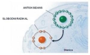 antioksidans cjepljenje djeca