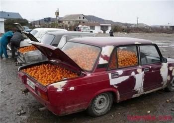 prodaja mandarina