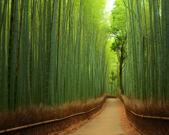 1. Bamboo Forest (China)