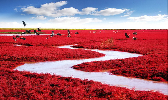13. Red Beach (China)