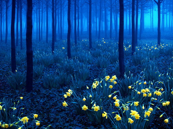 2. Black Forest (Germany)