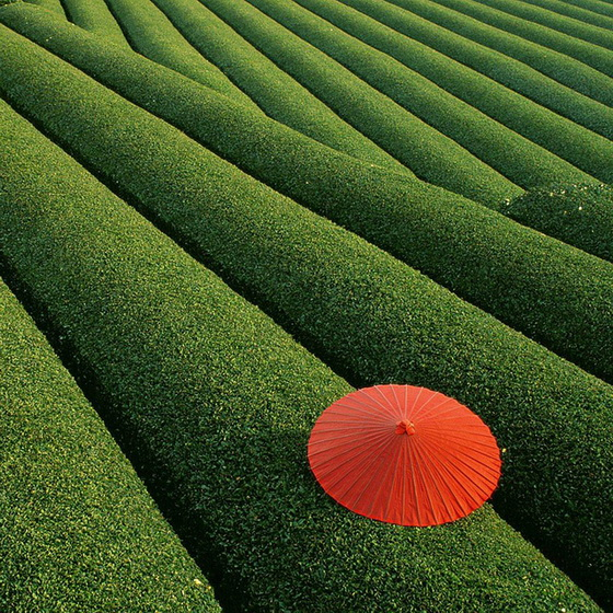 3. Fields of Tea (China)