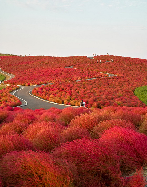 5. Hitachi Seaside Park (Japan)