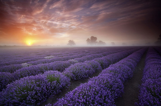 9. Lavender Fields (France)