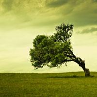 Koje vas stablo najviše doziva?