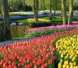 Keukenhof-Gardens-Javaman-Netherlands
