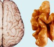 brain-walnut-getty