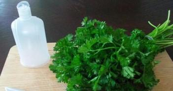 parsley-008