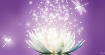 lotus_flower_sparkle