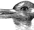 PSM_V54_D328_Optical_illusion_of_a_duck_or_a_rabbit_head
