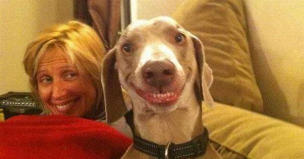 smiling-animals-3-5-1024x536