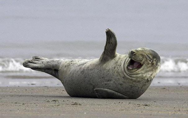 smiling-seal