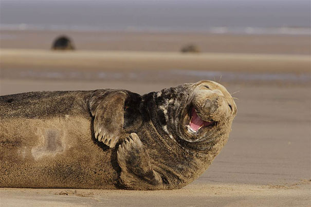 the-happiest-animals-in-the-world-13596