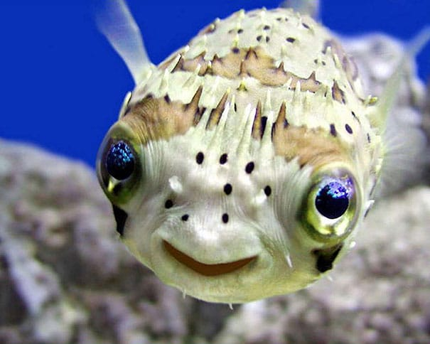 the-happiest-animals-in-the-world-15875