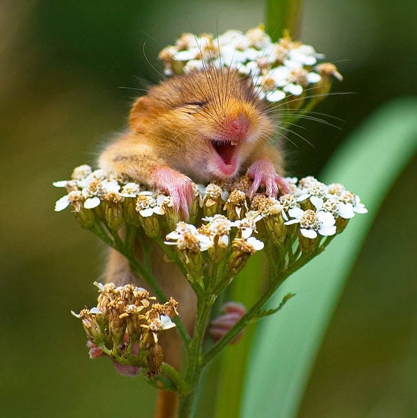 the-happiest-animals-in-the-world-24659