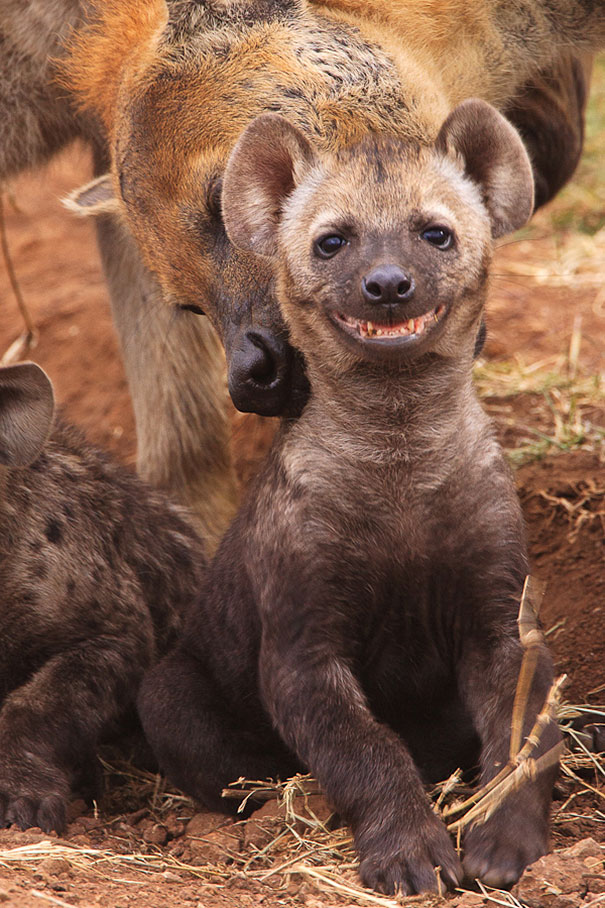 the-happiest-animals-in-the-world-84873