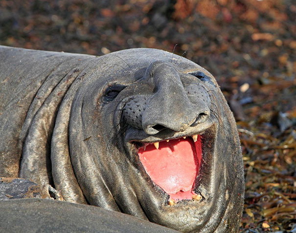 the-happiest-animals-in-the-world-97975