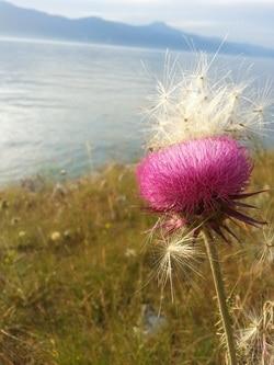 cvijet u blizini svjetionika