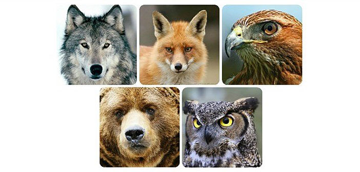 TEST: Koja vas od OVIH 5 životinja najviše fascinira? Odgovor otkriva puno o vama!