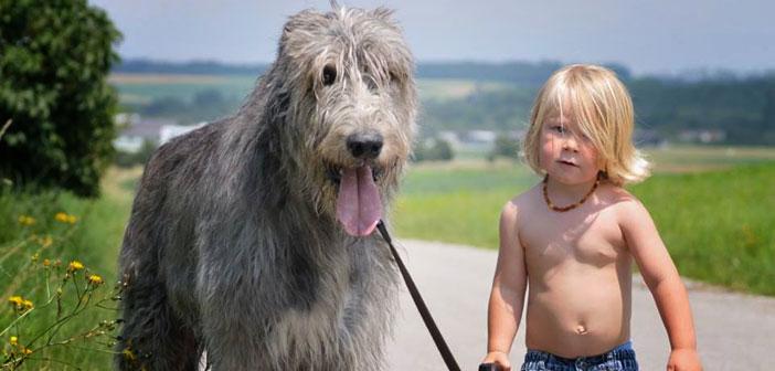 Nevjerojatna mudrost 6-godišnjeg dječaka kojemu je uginuo pas