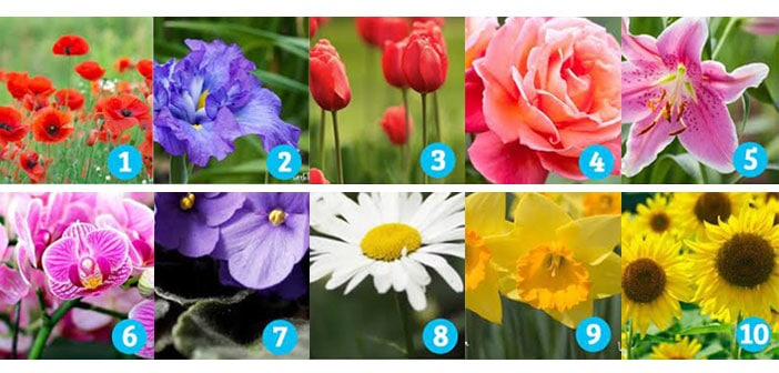 TEST: Cvijet koji vas najviše privlači potpuno otkriva vašu osobnost - Koji vi birate?