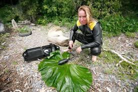 Dr Elizabeth von Muggenthaler je vodeći istraživač u području akustike koji se bavi iscjeliteljskim kvalitetama predenja mačaka