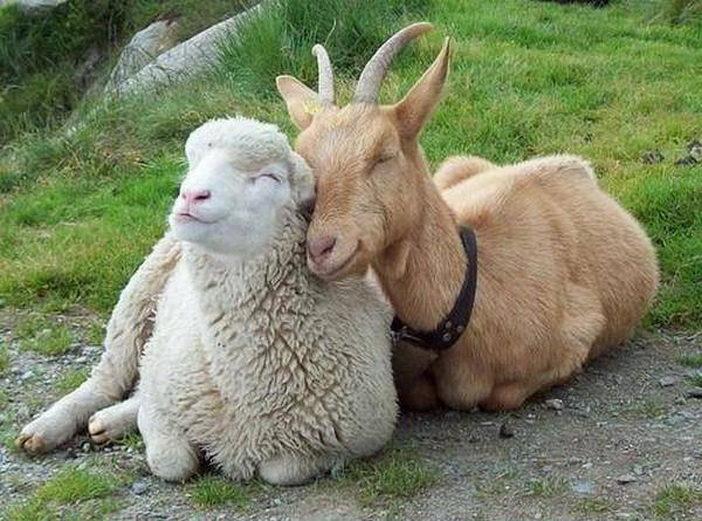 animal-friendship-38