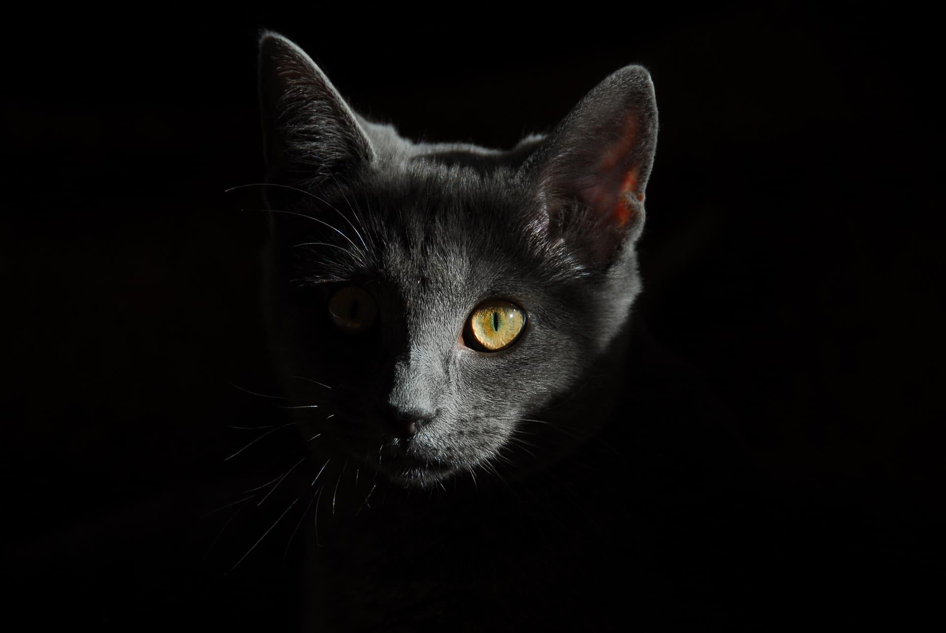 Evo zašto su mačke prirodno nadareni iscjelitelji!