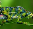 chameleon-body-painting--ist