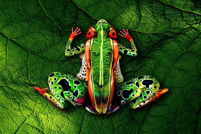 frog-body-painting-optical-illusion-johannes-stotter
