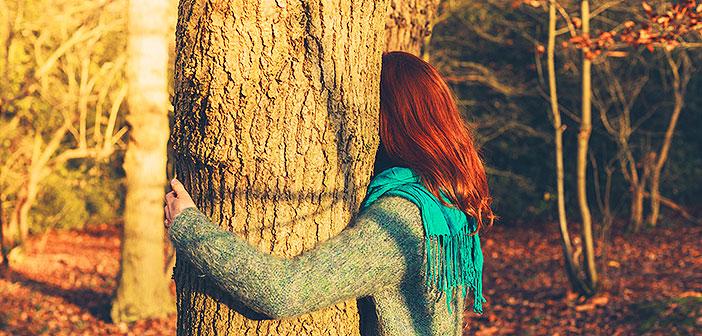 Svako stablo nosi duboku simboliku i poruku - Otkrijte što vam šapće drveće!