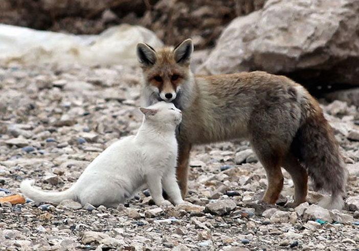 unusual-animal-friendship-7-3
