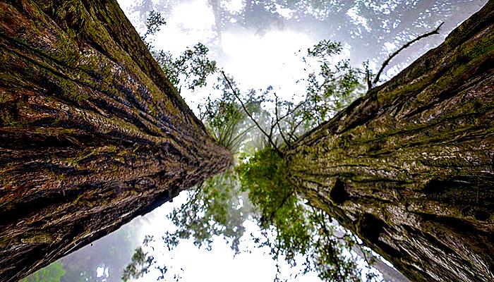 Stabla nam daju energiju - Kako pronaći svoje drvo, zašto i kako ga grliti