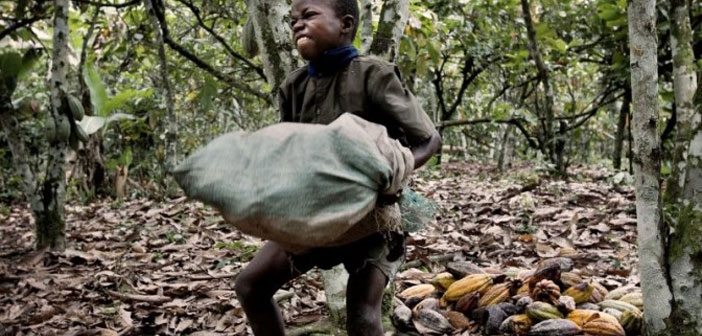 Hershey, Nestle i Mars koriste djecu robove da bi proizveli svoje čokolade