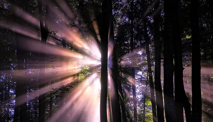 EVO 4 neobične tehnike kako vas šuma može iscijeliti - Počnite već danas!