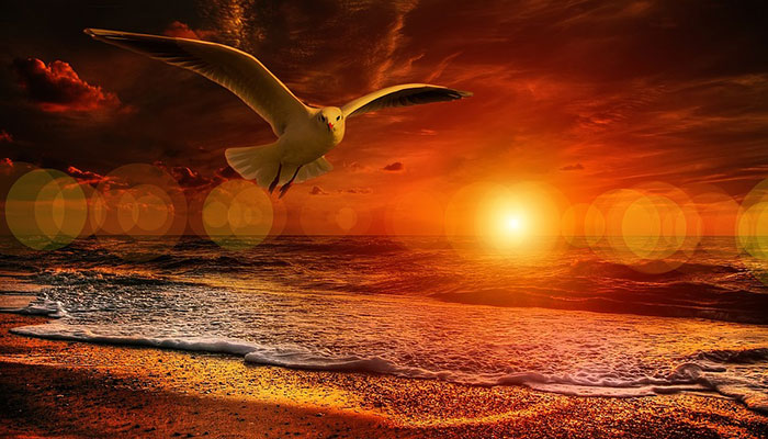 Horoskop za sve znakove za kolovoz/august i mlad Mjesec u Lavu 01.08. - Vatra na početku, razum na kraju!