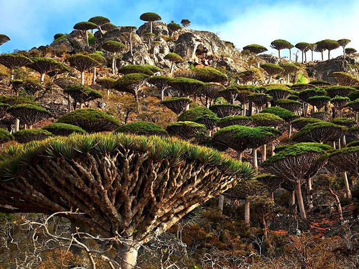 5 Socotra