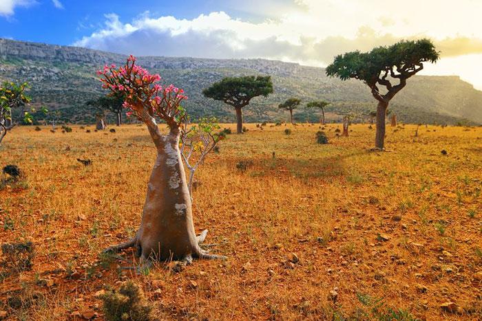 7 Socotra 02