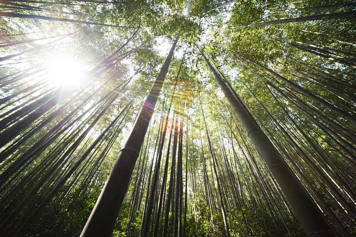 Moćne lekcije bambusa od majstora s Istoka - Ne bori se protiv vjetra!