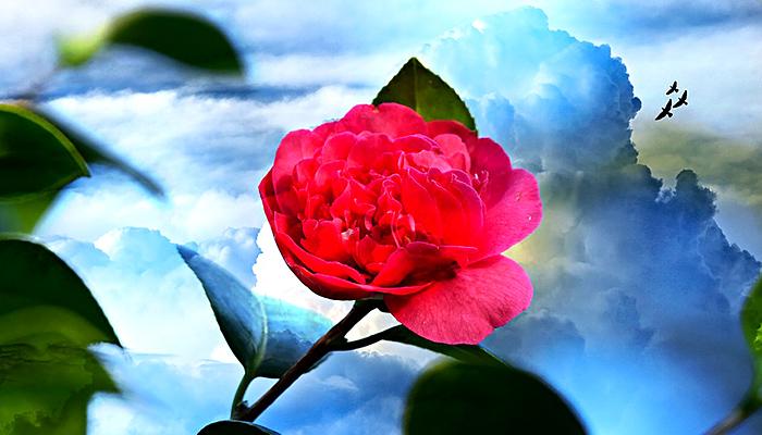 Možda niste znali: Cvjetni bonton i simbolika svakog cvijeta