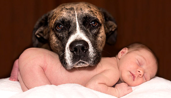Moja djeca su živa zahvaljujući našem psu – neki nikada to neće moći razumjeti