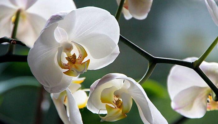 3 magične biljke za sreću, ljubav i uspjeh: Evo koje cvijeće treba njegovati u svom domu