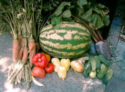vrt povrce 2