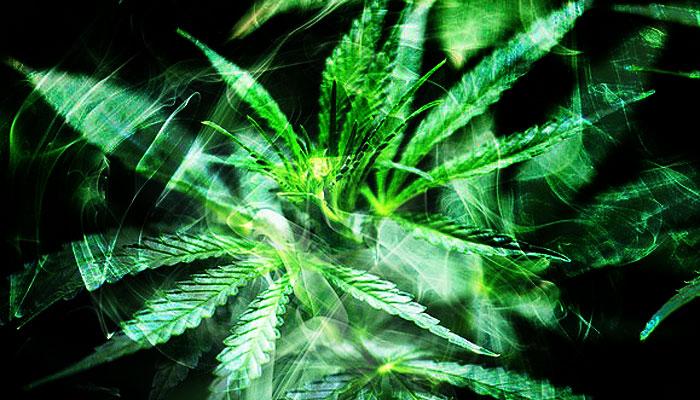 Konoplja – božanska biljka izvanzemaljskog porijekla?