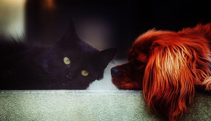 Duhovno značenje posjedovanja mačke i psa