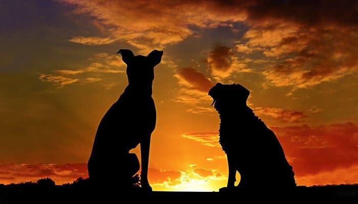 Reci mi kojeg psa imaš i reći ću ti kakav si: Evo kakve vlasnike imaju psi mješanci!