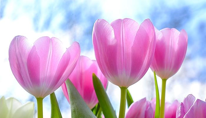 15 vrsta cvijeća koje ima snažnu povezanost s anđelima