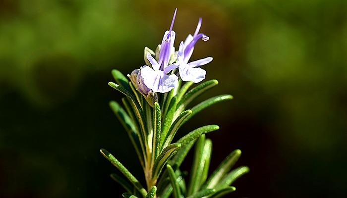 Unesite veselje i obilje u život: 15 biljaka koje uklanjaju negativnu energiju