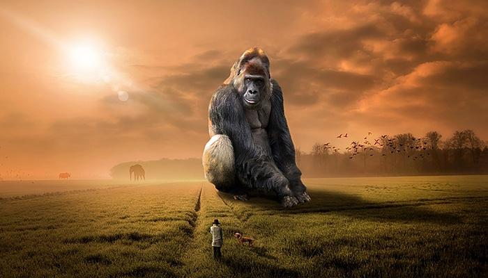 Velike promjene u svijesti životinja - Prestižu li nas u evolucijskoj inteligenciji?