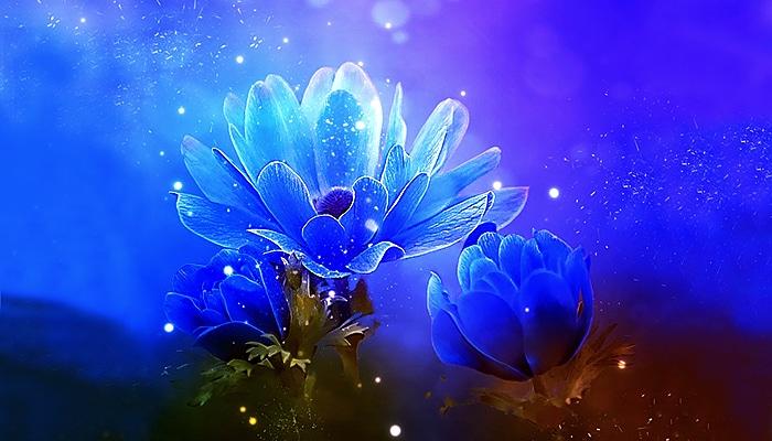 Ako hoćete da se u ovom svijetu osjećate kao u raju – živite među cvijećem i s cvijećem
